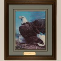 Amling_Eagles-4.jpg