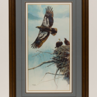 Amling_Eagles-1.jpg